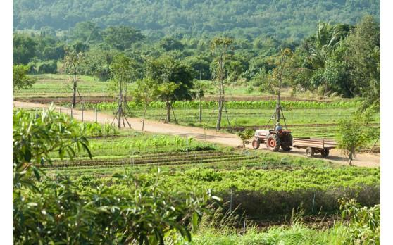 สวนเกษตรออร์แกนิคของบริษัทเองที่อยู่เขาใหญ่